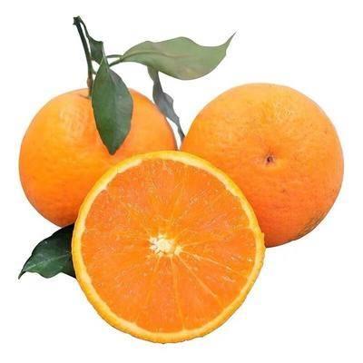四川省成都市成華區青見柑桔 四川當季新鮮水果丑八怪青見丑橘包郵包售后