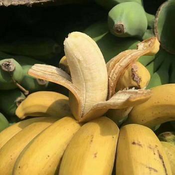 小米蕉 10斤新鲜包邮,产地现摘现发,果肉肥厚,口感极好