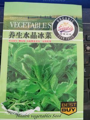 河南省商丘市夏邑縣 養生冰菜種子