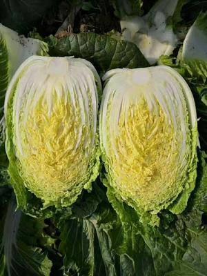 山東省臨沂市郯城縣 白菜價。真正的白菜價。