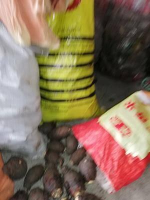廣西壯族自治區桂林市興安縣 沒打認何農藥,純天然種植的香芋。