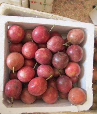廣西壯族自治區南寧市江南區 廣西百香果大果一件代發3斤5斤10斤西番蓮雞蛋果