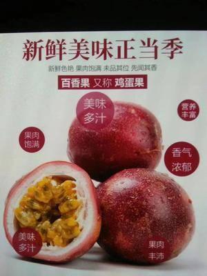 廣西壯族自治區玉林市容縣臺農一號百香果 一件代發。包郵包善后。