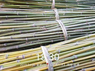 湖南省懷化市溆浦縣 菜架竹