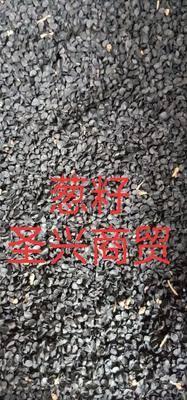 河北省保定市安國市香蔥種子 蔥籽子藥用非種子一袋一公斤