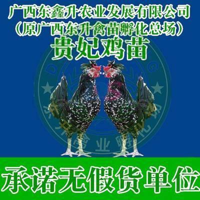 廣西壯族自治區南寧市西鄉塘區 貴妃雞苗