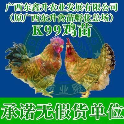 廣西壯族自治區南寧市西鄉塘區 k9麻黃雞苗——承諾無假貨單位