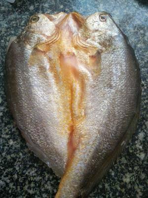 浙江省杭州市富陽市黃魚干 大黃魚 干品 保鮮