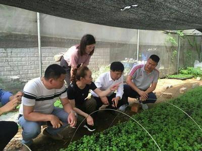 廣西壯族自治區百色市靖西縣泡桐木