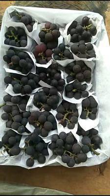 山東省青島市萊西市巨峰葡萄 0.8-1斤 5%以下 1次果