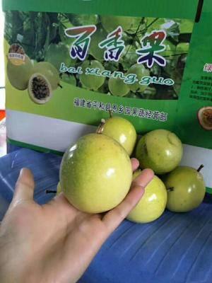 海南省三亞市崖州區 黃金百香果優惠價格