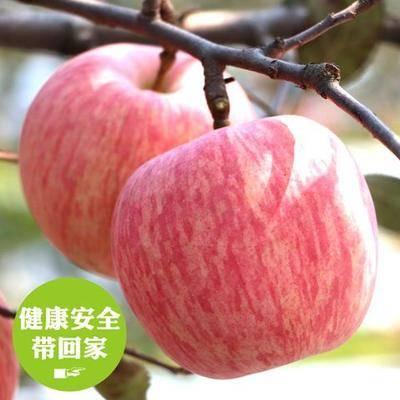 陜西省咸陽市禮泉縣 農家蘋果水果