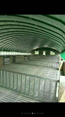 天津靜海縣大棚鋼管