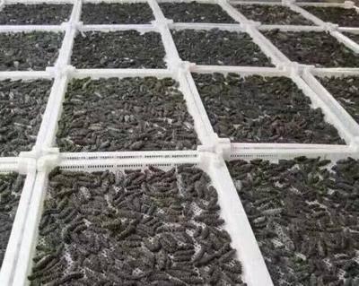 江蘇省蘇州市吳中區 廠家批發,淡干海參
