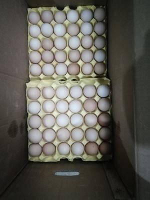 廣西壯族自治區百色市西林縣 普通雞蛋