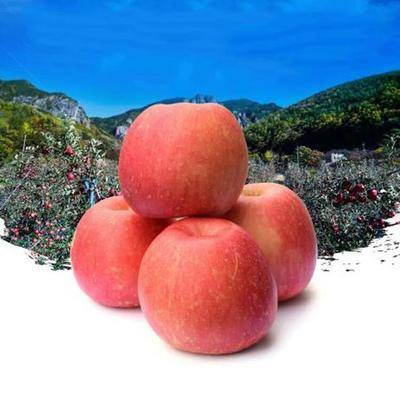 廣東省廣州市白云區 水晶紅富士蘋果