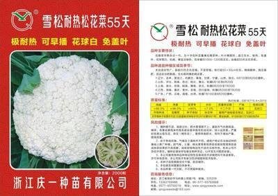 山東省濟南市歷城區松花菜種子 極耐熱可早播免蓋葉花球白