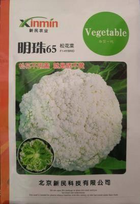 河南省南陽市臥龍區松花菜種子 明珠65松花菜不用蓋球的松花菜