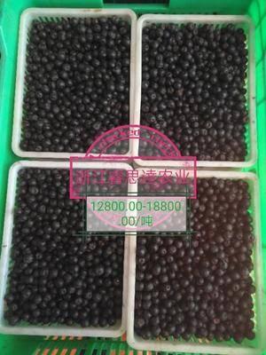 浙江省杭州市淳安縣速凍藍莓