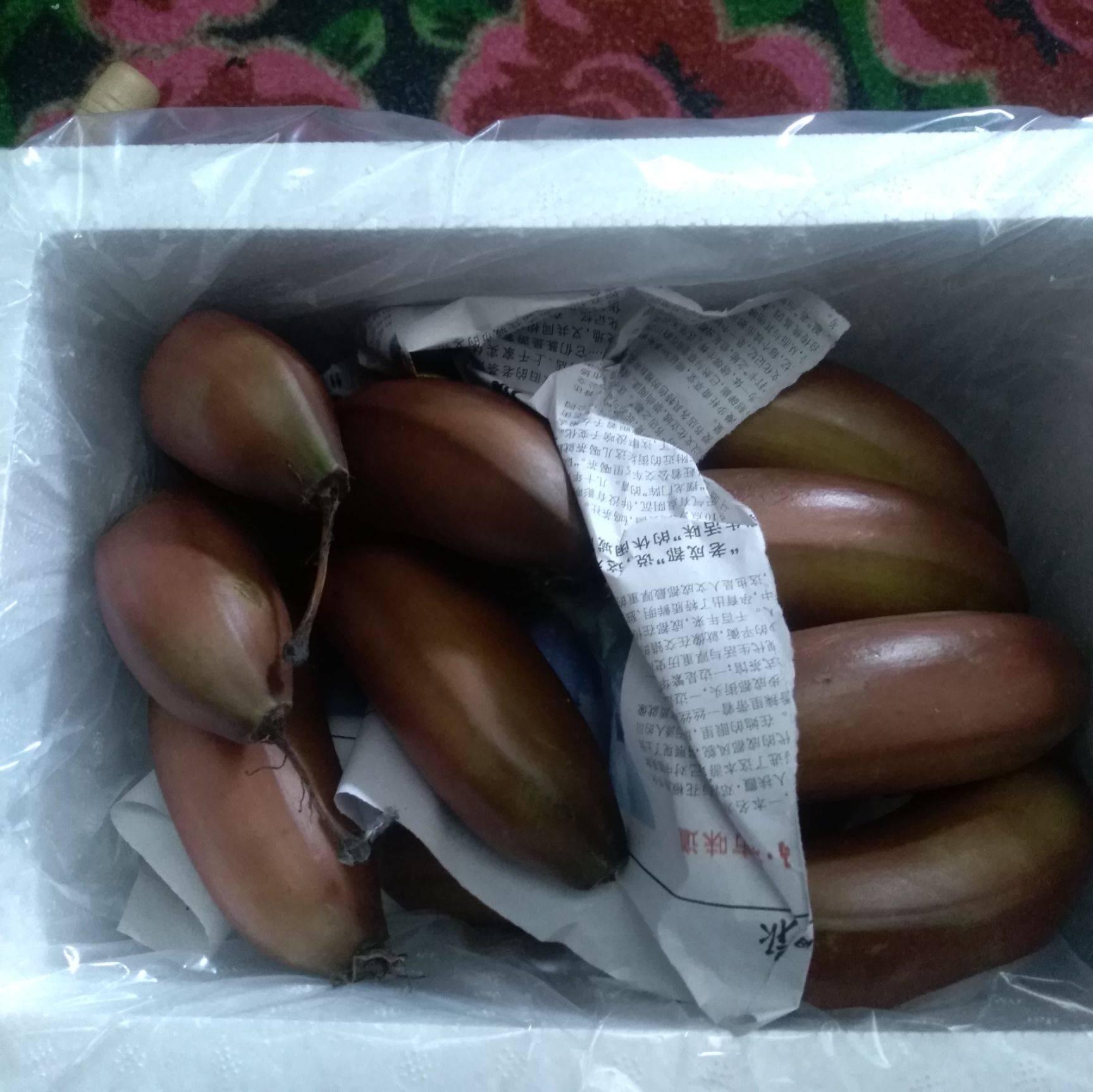 紅香蕉 只發一級果生蕉發貨沒有催熟劑更健康泡沫箱+真空凈重5斤包郵