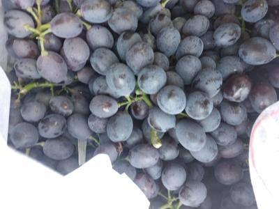 山東省濰坊市坊子區 精品有機玫瑰香葡萄