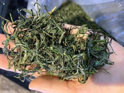 安徽省黃山市黃山區高山綠茶 黃山毛峰大揉茶
