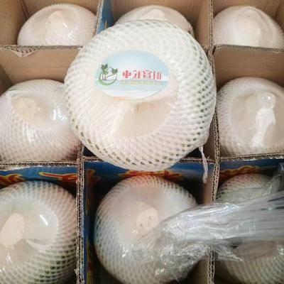 海南省海口市美蘭區 海南 新鮮椰青9個大椰子 去皮椰青 文昌產地直發