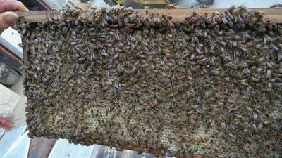 上海閔行區 安徽大別山土蜂蜜,自產自銷