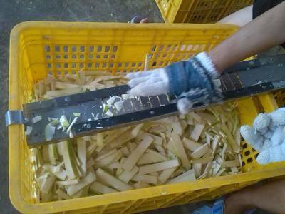 廣東省清遠市英德市 麻竹筍   鹽片,鹽絲