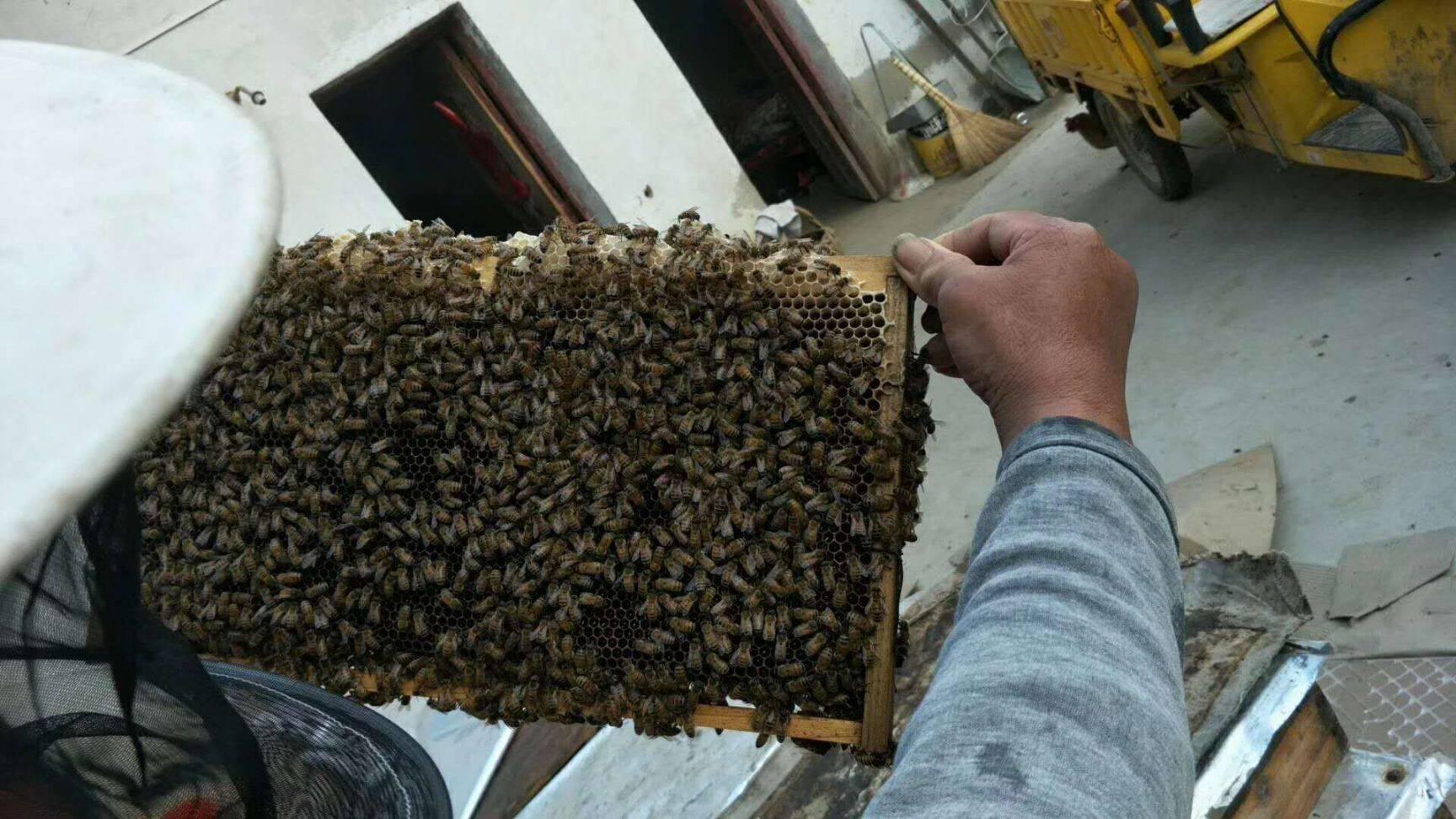 安徽大別山土蜂蜜,自產自銷