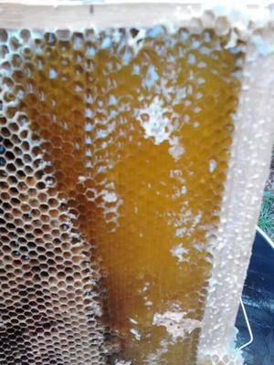 湖南省懷化市麻陽苗族自治縣土蜂蜜  塑料瓶裝 1年 100% 保質期兩年以上