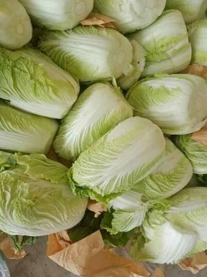 山東省臨沂市蘭陵縣黃心大白菜 大量供應各種新鮮大棚蔬菜