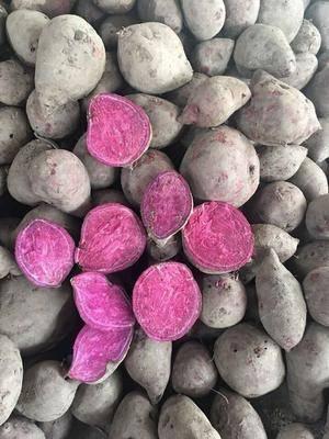 廣西壯族自治區崇左市龍州縣 越南紫薯