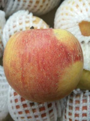 湖南省益陽市赫山區 新疆阿克蘇紅旗坡的冰糖心蘋果