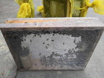 廣西壯族自治區玉林市北流市 中蜂籠蜂