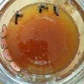 野生純蜂蜜
