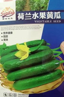 河南省商丘市夏邑縣 荷蘭水果黃瓜種子 營養健康 脆甜 美味 200粒
