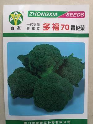 山東省濟南市歷城區紫花椰菜種子 西蘭花種子