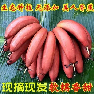 福建省漳州市平和縣 紅香蕉紅皮美人蕉無催熟劑凈重5斤裝包郵