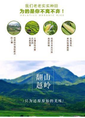 云南省昆明市東川區甜玉米 帶殼 甜