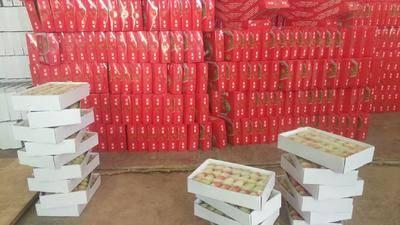 云南省曲靖市會澤縣蒙特瑞草莓 20克以上
