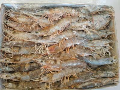 浙江省寧波市北侖區凍海蝦 野生大海蝦,肉多,好吃不貴
