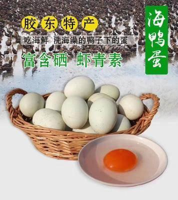 山東省威海市乳山市海鴨蛋 乳山自家養殖海鴨子下的蛋