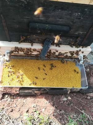 四川省眉山市東坡區百花粉 24個月以上