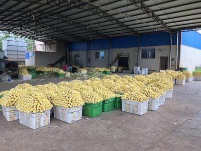 云南省曲靖市宣威市速凍玉米粒 云南高原產甜玉米,品質口感極傳