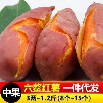 六鰲紅薯中果