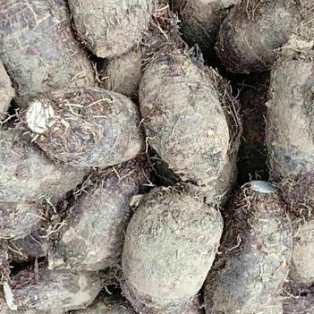荔浦芋頭(小號,半斤到九兩)