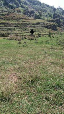 貴州省六盤水市水城縣荒地 大量土地出租  荒山  山林出租  需要的請聯系