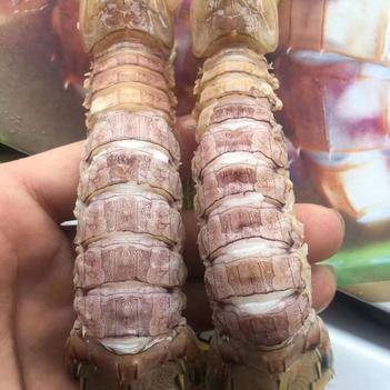 冻皮皮虾 濑尿虾