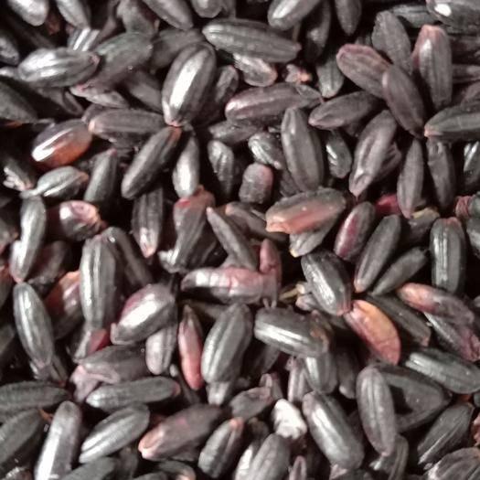 四川省成都市金牛区 黑米,黑香米